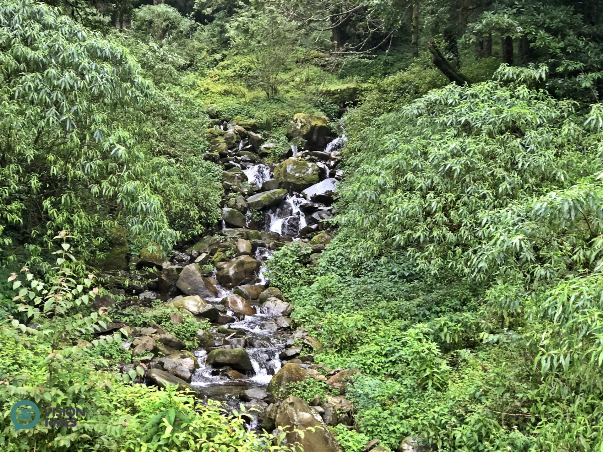Tefuye Old Tail is a great place for hikers to get a sense of the true beauty of Alishan. (Image: Billy Shyu / Vision Times)