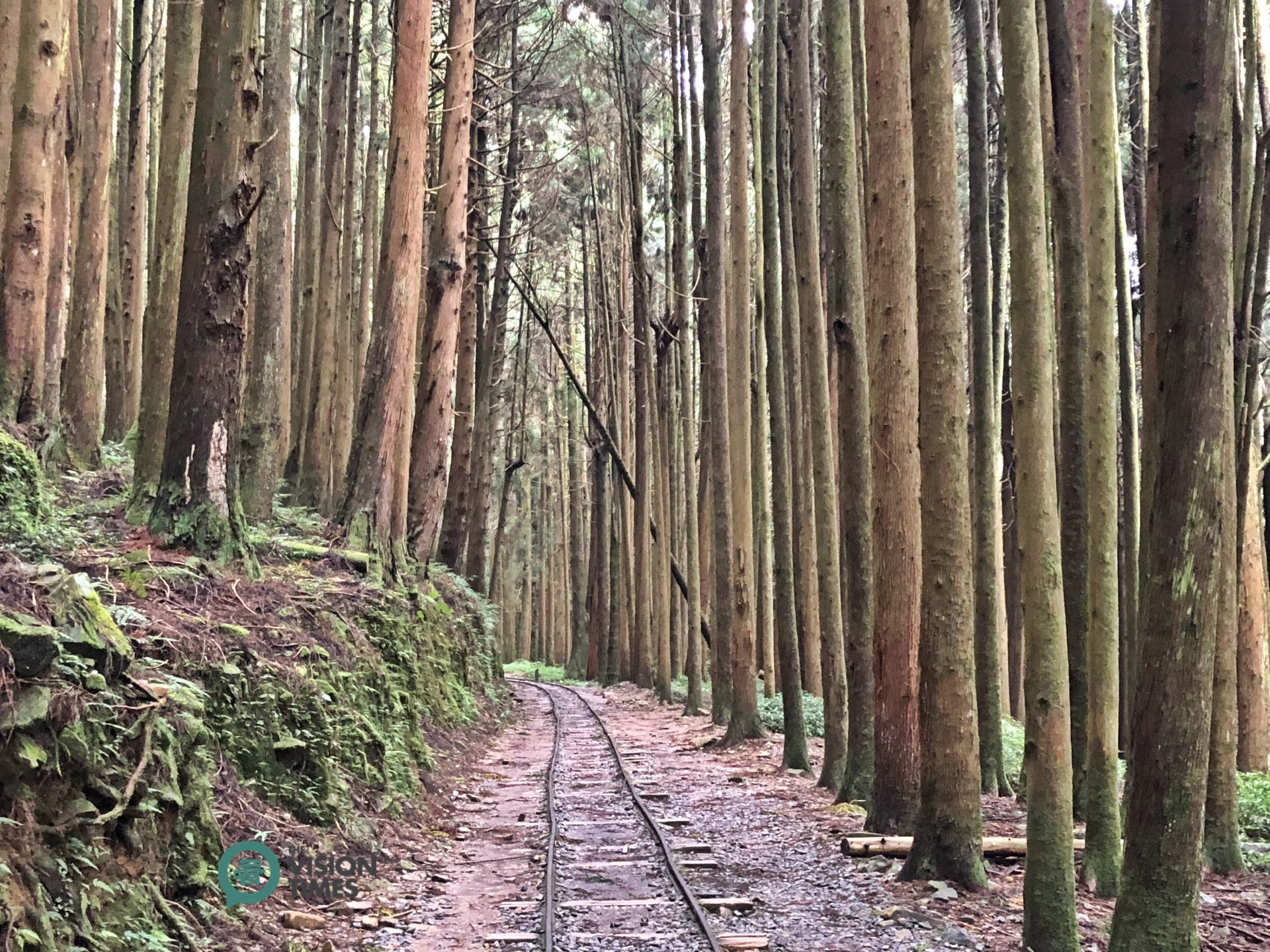 The Tefuye Old Trail was transformed from an abandoned railway and an old hunting trail. (Image: Billy Shyu / Vision Times)