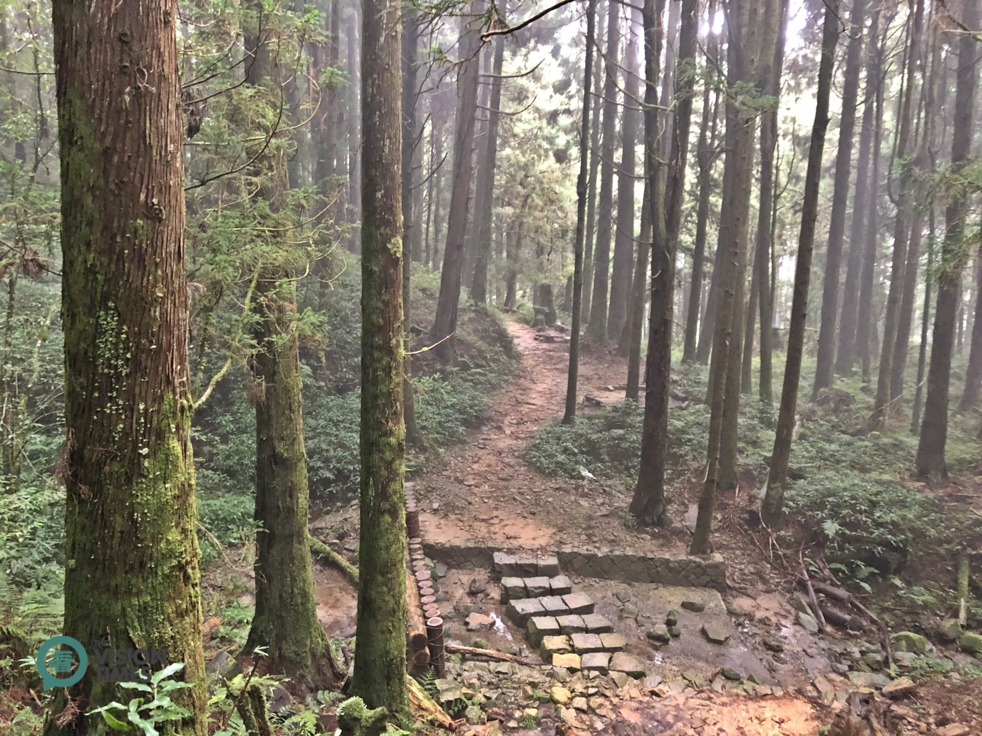 Hikers can get a sense of the true beauty of Alishan National Scenic Area. (Image: Julia Fu / Vision Times)