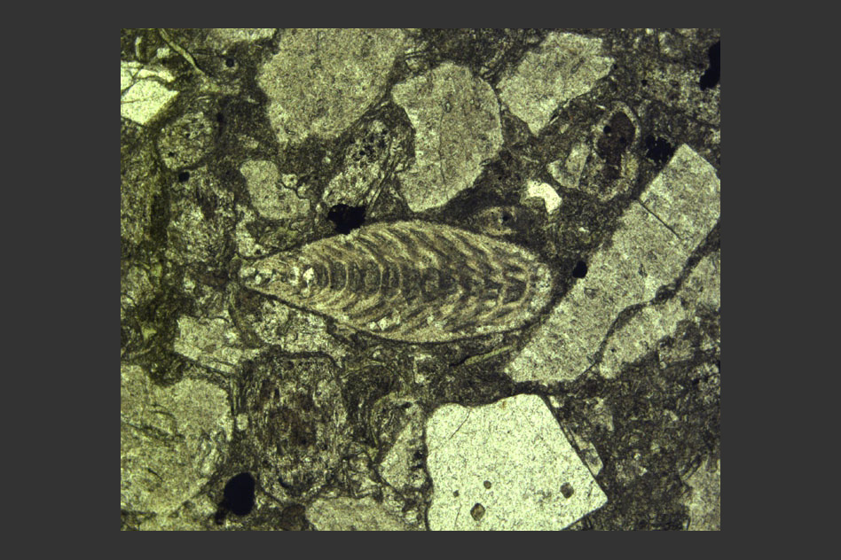 Photomicrograph (microscope slide photo) showing a Permian foraminifer fossil (center) surrounded by volcanic ash within the latest Permian layer immediately below the extinction horizon at Penglaitan. Foraminifers are single-celled marine organisms with characteristic multichambered shells. (Image: Image: Shuzhong Shen)