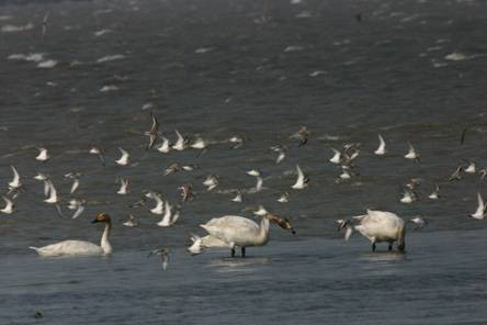 The Gaomei Wetland is a popular location for bird-watching. (Image: Taichung City Government)