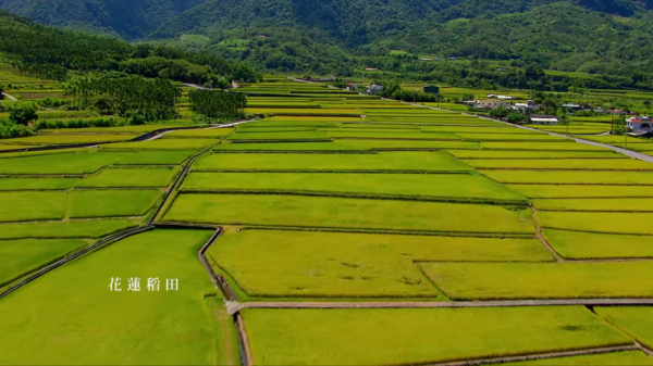 Beautiful landscape of Taiwan's paddy fields. (Image: Screenshot from a YouTube. provided by Taiwan's Ministry of Foreign Affairs.)