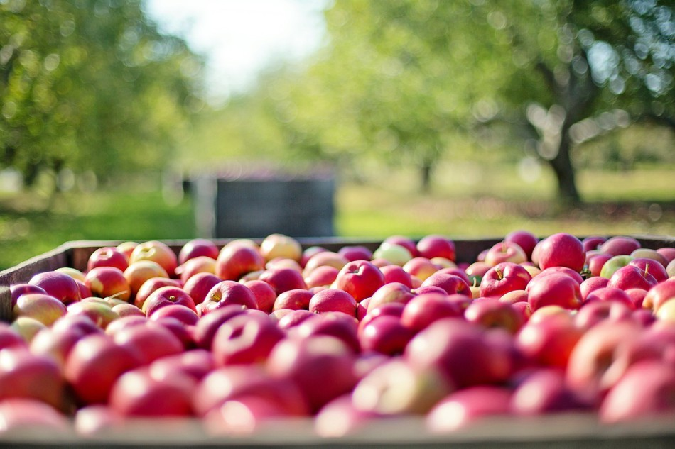 Hidefumi grows apples using completely organic methods and no pesticides at all. (Image: via pixabay / CC0 1.0)