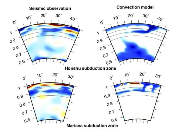 Graphic of stagnant slabs under the Japanese island of Honshu (top) and the Mariana Trench (bottom) using seismic data (left) and computer simulations (right). Stagnant slabs (blue) plunge down to the border between the upper and lower mantle then screech to a stop. (Credit: Mao & Zhong 2018, Nature Geoscience)