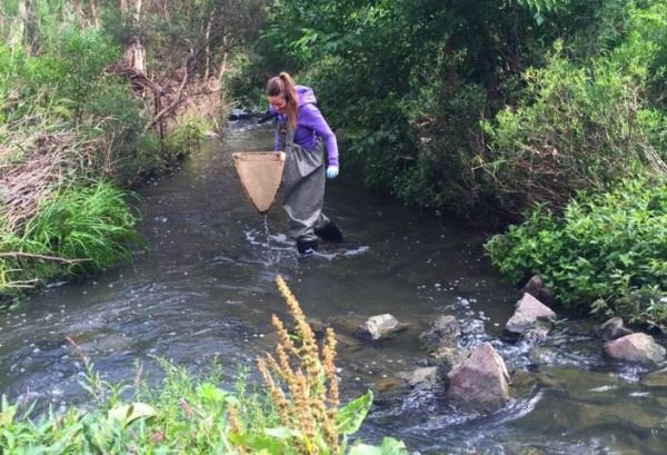 Erinn Richmond collects aquatic invertebrates to test for pharmaceuticals in Brushy Creek in Churnside Park, Victoria, Australia. (Credit: Keralee Browne)