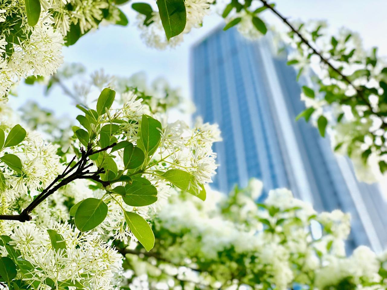 flower-3324180_1280