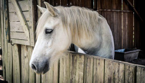 horse-1042386_1280