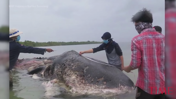 A Dead Whale Washed Ashore With 13 Pounds Of Plastic In Its Stomach - TIME 0-36 screenshot