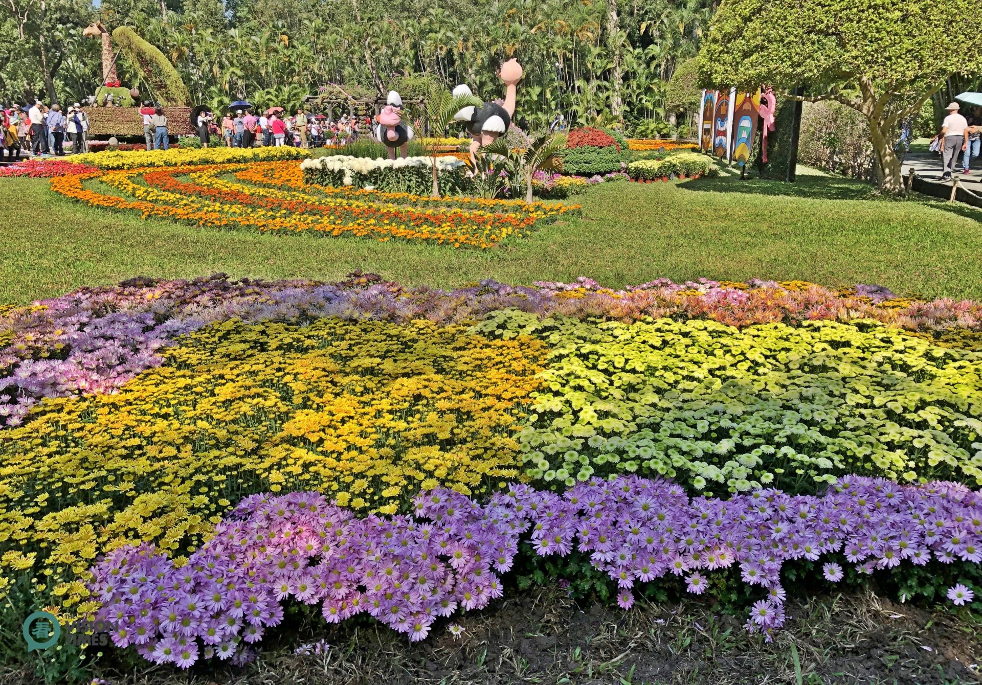 There will be more than 60,000 people visiting this chrysanthemum exhibition this year. (Image: Julia Fu / Vision Times)