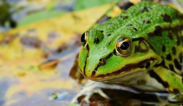 frog-1530803_1280
