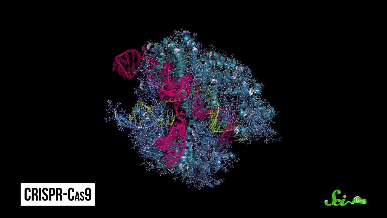 CRISPR_ A Gene-Editing Superpower 2-31 screenshot