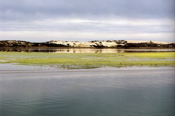 One of Australia's most significant wetlands, the Coorong, at the mouth of the River Murray, is the focus of a multi-million dollar research partnership that aims to improve the ecological health of the region and protect threatened birds and fish.(Image: CSIRO via wikimedia CC BY 3.0)