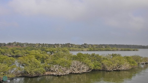Aogu Wetland is designated the location for Aogu Wildlife Conservation Sanctuary. (Billy Shyu / Vision Times)