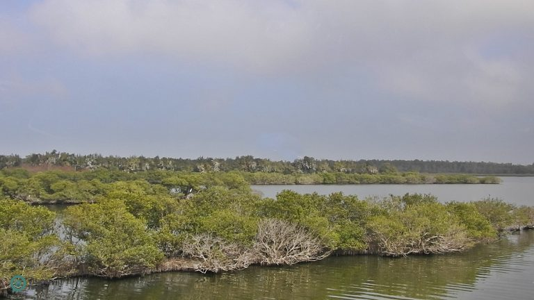 Aogu Wetland is designated the location for Aogu Wildlife Conservation Sanctuary. (Billy Shyu / Nspirement)