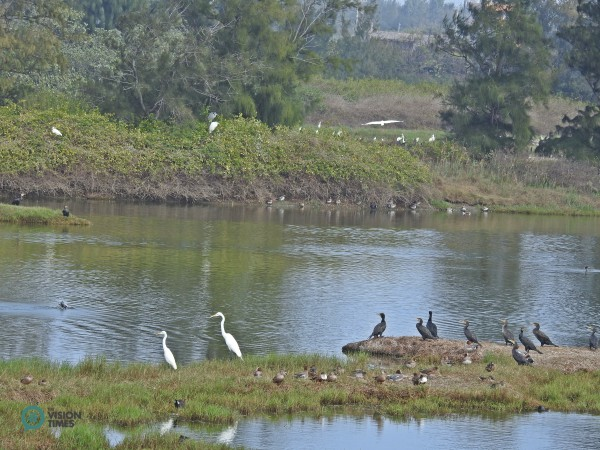 Visitors can spot many Great Cormorants (鸕鶿), Ardea alba (大白鷺) and other migratory birds at the Aogu Wetland. (Image: Billy Shyu / Vision Times)
