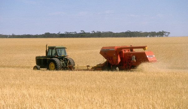 Australia expects grain exports to grow thanks in part to the CPTPP. (Image: CSIRO via wikimedia CC BY 3.0)