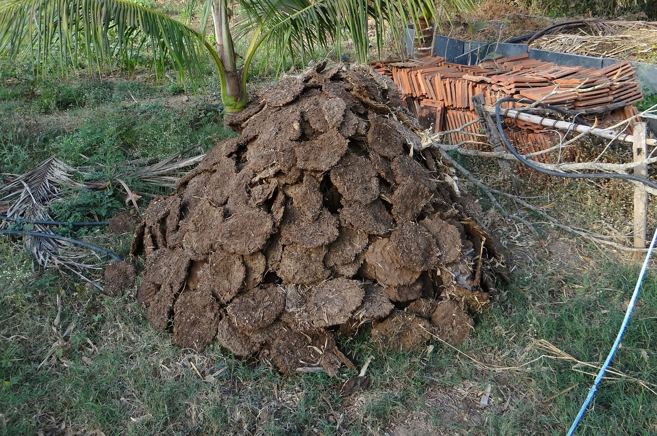 cow-dung-272827_1280