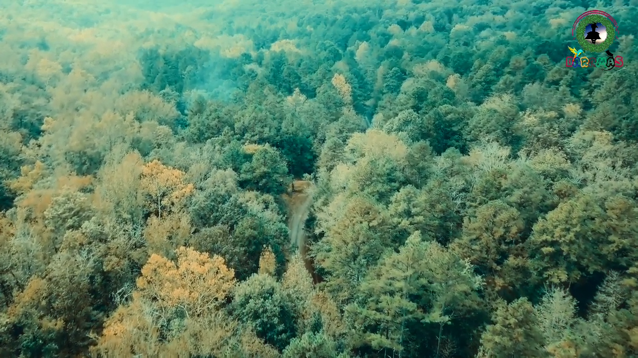 वृक्षमानव विश्वेश्वर दत्त सकलानी __ Tree Man __ Mountain Man of Uttarakhand __ Vishweshwar Datt Sakl 1-12 screenshot