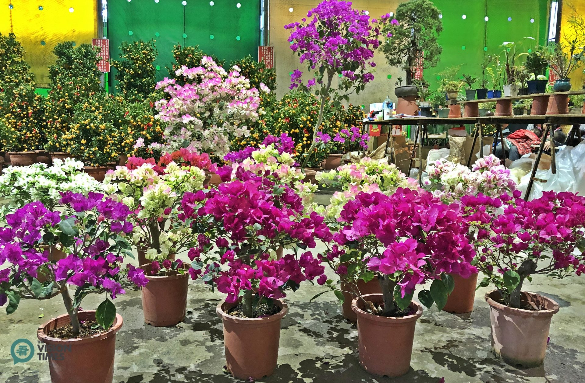 There are 200 plus stalls selling a great variety of flowers at the Flower Fair. (Image: Billy Shyu / Vision Times)
