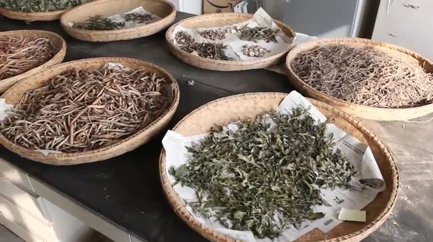 12 traditional Chinese medicinal materials have been given the ISO standard till now.(Image: Screenshot / YouTube)