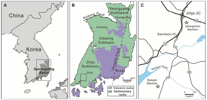 Locality map of the study area. A, distribution of Cretaceous sedimentary basins around the Korean Peninsula; rectangular area is magnified in B. B, simplified geological map of the Gyeongsang Arc System; the sedimentary rocks represent the Gyeongsang Backarc Basin, while the volcanic rocks represent the Gyeongsang Volcanic Arc; rectangular area is magnified in C (modified from Chough & Sohn 2010; the displacement by the Yangsan Fault has been recovered). C, road map of the study area showing the two fossil localities (stars). (Credit: Paul Selden)