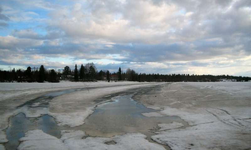 Trees are removed from cold lake beds in Scandinavia. (Image: Professor Mary Gagen, Swansea University)