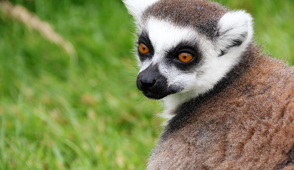 Two_Chinese_Arrested_In_Madagascar_For_Trying_To_Transport_Endangered_Animals2