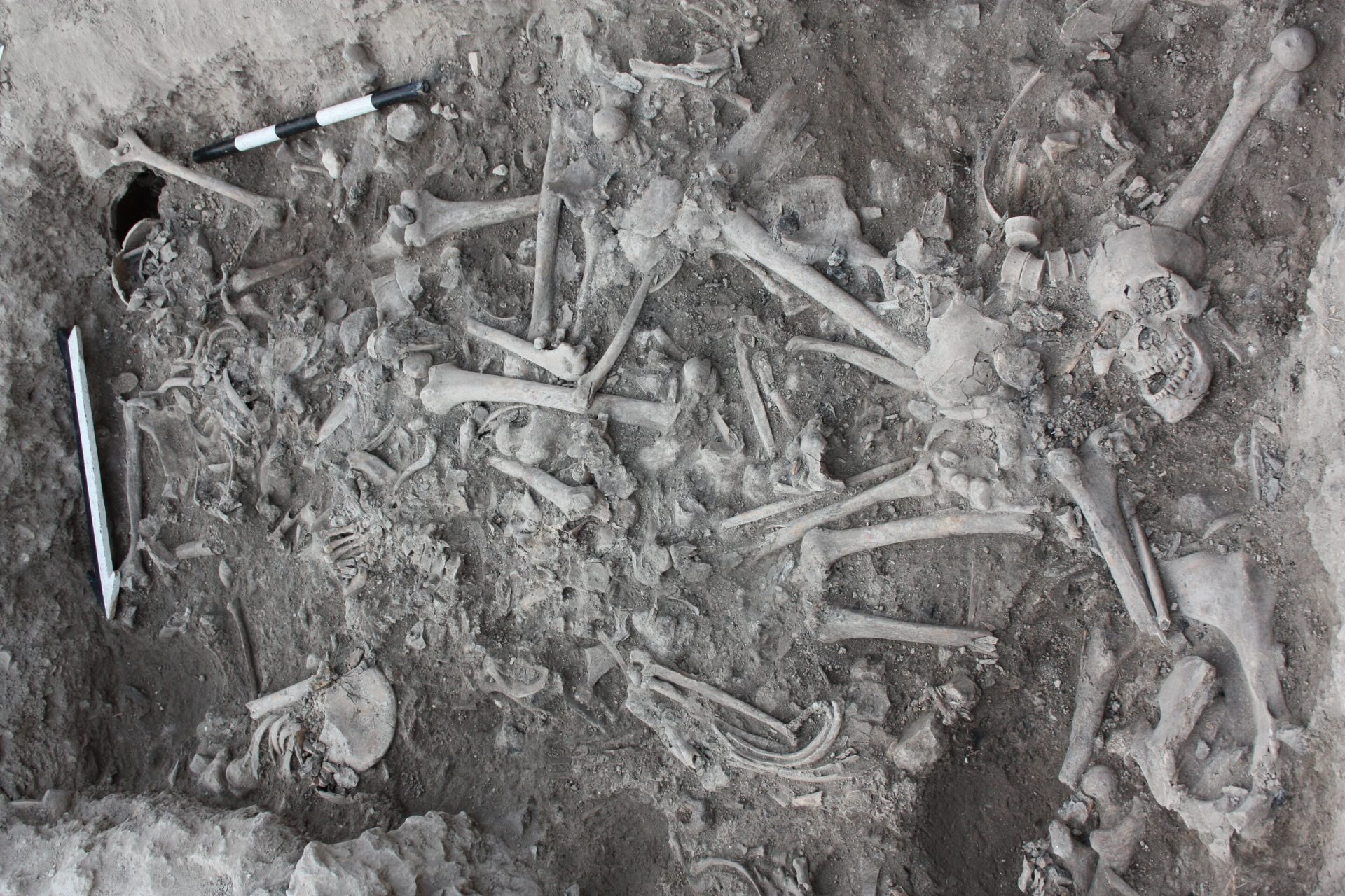 The bones of the Crusaders found in a burial pit in Sidon, Lebanon. (Image: Claude Doumet-Serhal)