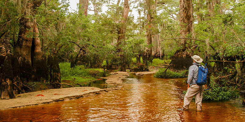 Black water, white sand and millenia-old trees at Black River. (Image: Dan Griffin)