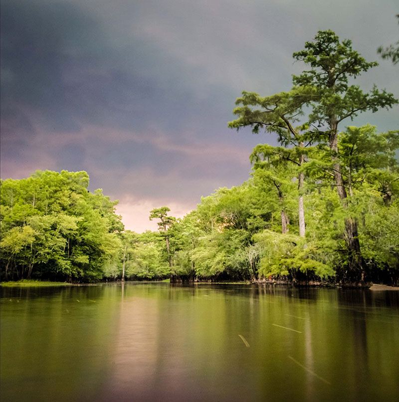Ancient blad cypress trees line the Black River in North Carolina. (Image: Dan Griffin)