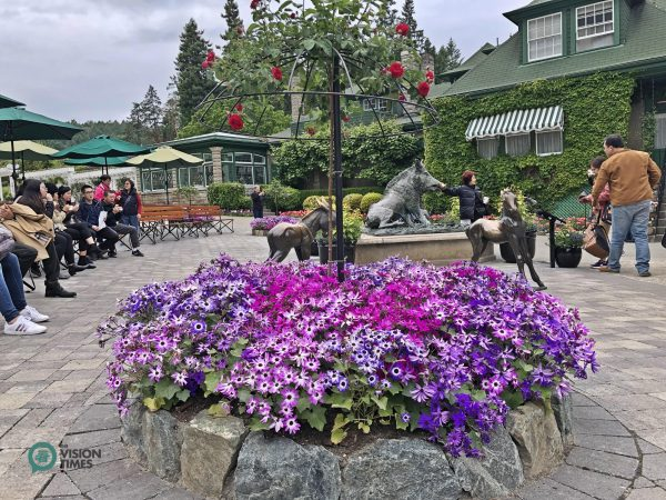 The bronze statues of a boar, a donkey and a foal in the Butchart Gardens. (Image: Billy Shyu / Vision Times)