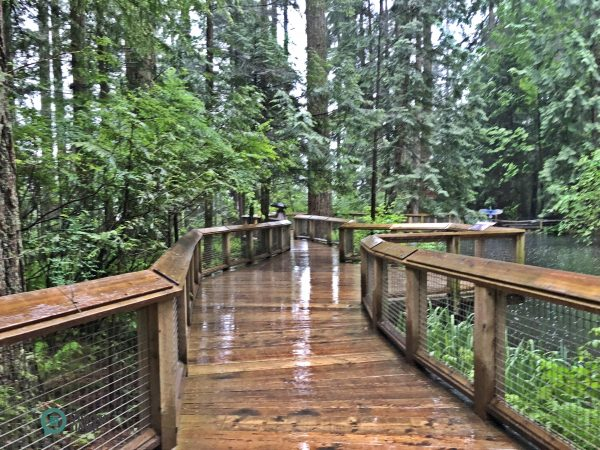 the Nature's Edge Boardwalk in the park. (Image: Billy Shyu / Vision Times)