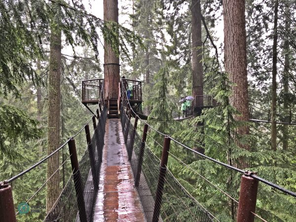 There are seven footbridges suspended between eight towering Douglas fir trees in the Capilano Suspension Bridge Park. (Image: Julia fu / Vision Times)