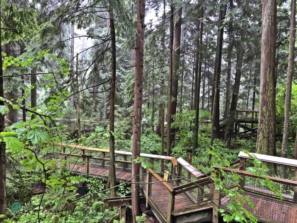 The beautiful winding boardwalk that weaves through the forest. (Image: Billy Shyu / Vision Times)