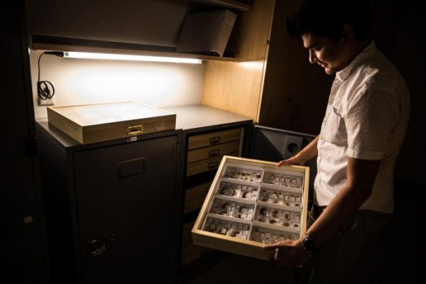 Barden showcases collections of prehistoric ant fossils from the Dominican Republic currently stored at his lab inside NJIT's Central King Building. (Image: P. Barden)