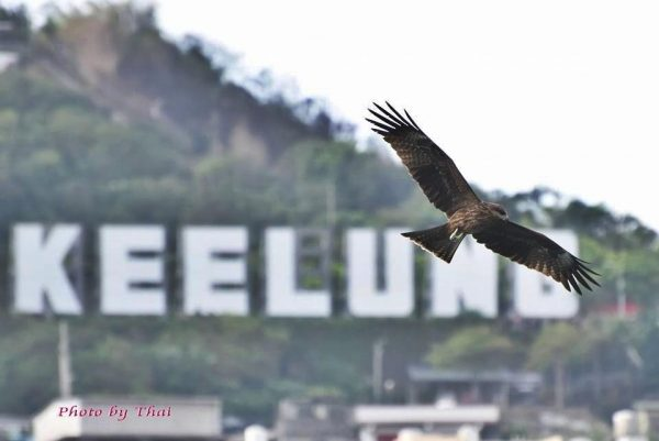 It's common to spot eagles soaring high in the sky over over the Keelung Harbor. (Image: Courtesy of King-Thai So)