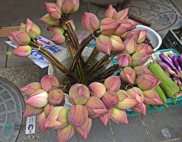 Lous flowers are sold at the lotus field and Jinbaoli Old Street. (Image: Julia Fu / Vision Times)