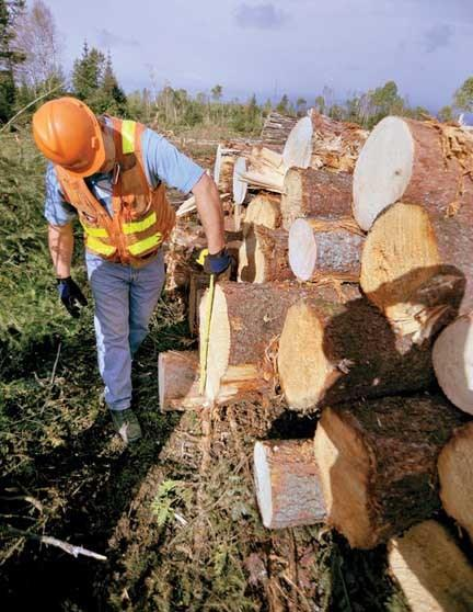 A professional forester will sort the sawlogs by species and overall condition before forwarding them to their next destination — either directly to a sawmill, or to a concentration yard. (Image: drydenobserver)