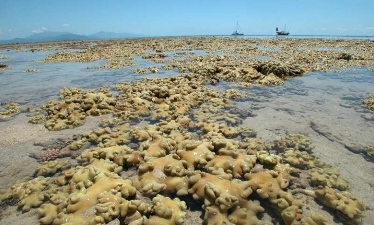 Soft coral are now dominating large areas of the shadow reef which in 1928 had many species of hard corals too. (Image: Professor Maoz Fine, Bar-Ilan University)