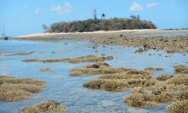 Patches of branching Acropora corals during low tide at Low Isles. (Image: Professor Maoz Fine, Bar-Ilan University)