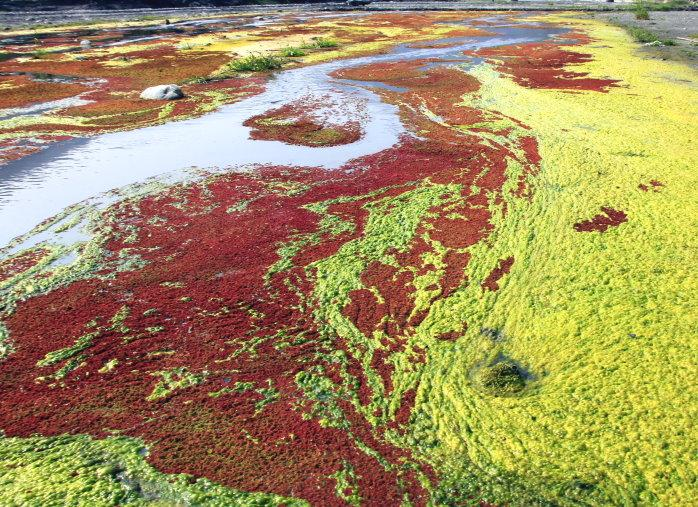 The amazing colorful red azolla and water ferns floating on Zhuoshui River in winter . (Image: Housekey999 旅人)