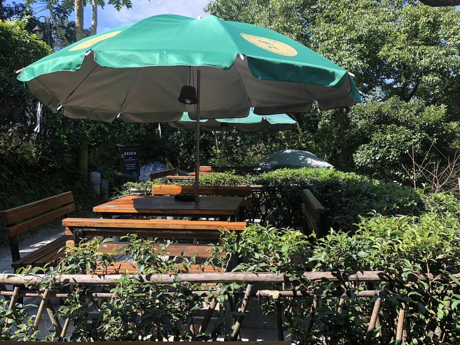 Visitors can appreciate tea culture at a table surrounded by live tea trees outside the tea house. (Image: Billy Shyu / Vision Times)