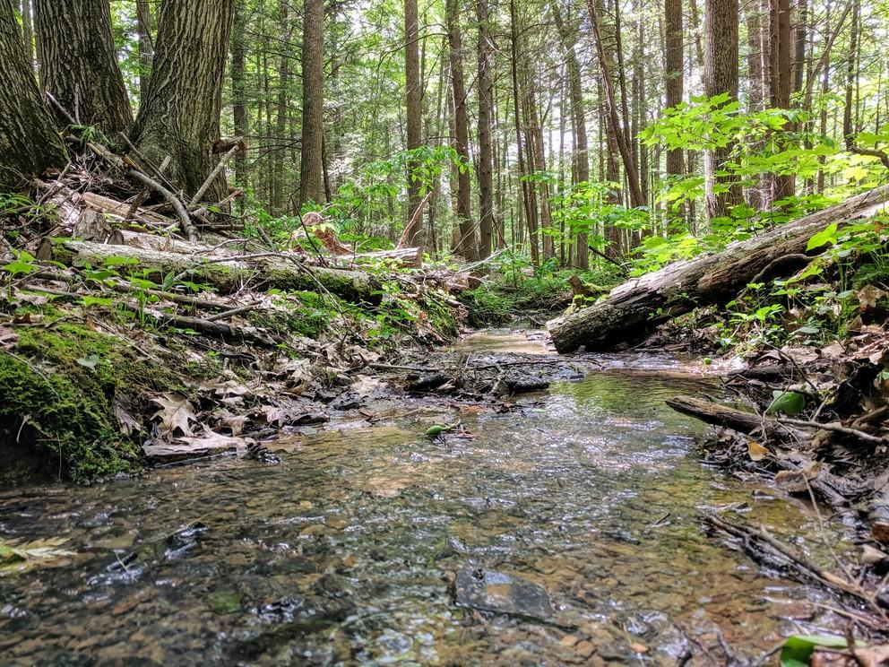 Current carbon cycle models may underestimate the amount of carbon dioxide released from the soil during rainy seasons in temperate forests like those found in the northeast United States, according to Penn State researchers. (Image: CAITLIN HODGES)