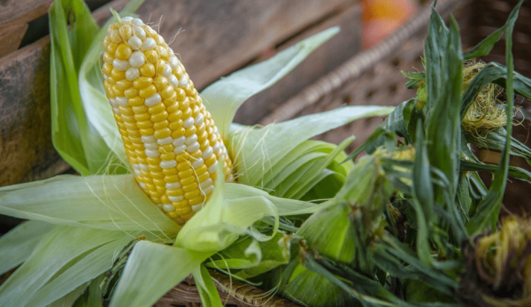 The vitamin content in corn is very high, 5-10 times more than that of rice and wheat. (Image: via pixabay / CC0 1.0)