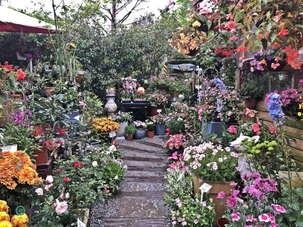 There are a wide variety of beautiful flowers and plants packed in the small square in front of the pizza cafe. (Image: Billy Shyu / Vision Times)