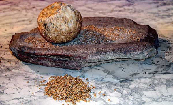 Ground stones were a 'major evolutionary success' as they allowed people to unlock the energy in plants by making flour. Image credit - José-Manuel Benito Álvarez/Wikimedia commons, licenced under CC BY-SA 2.5