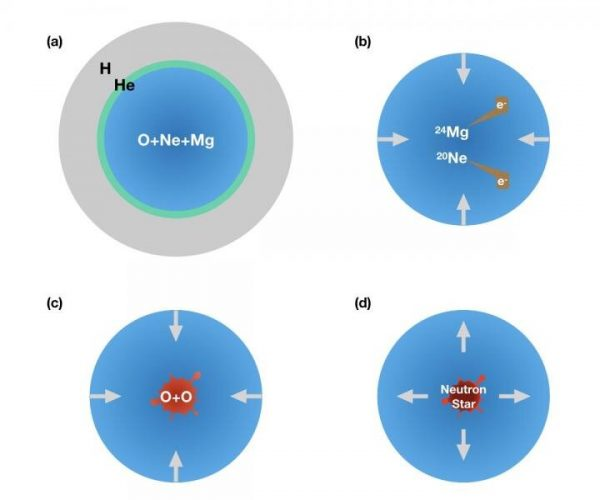 Figure 2: (a) A star core contains oxygen, neon, and magnesium. Once the core density becomes high enough, (b) magnesium and neon begin eating electrons and inducing a collapse. (c) Then oxygen burning is ignited and produces iron-group-nuclei and free-protons, which eat more and more electrons to promote further collapse of the core. (d) Finally, the collapsing core becomes a neutron star in the center, and the outer layer explodes to produce a supernova. (Image: Zha et al.)