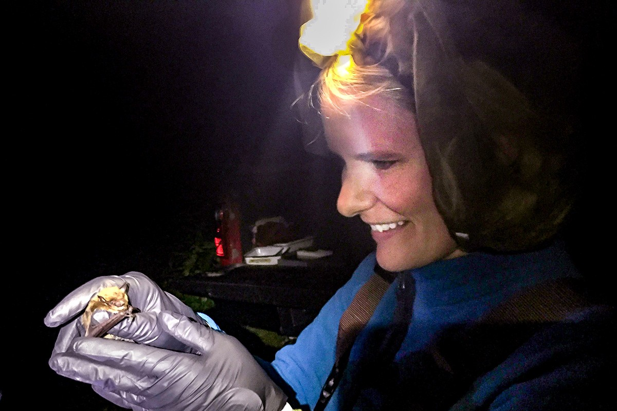 Illinois Natural History Survey wildlife biologist Tara Hohoff holds a bat during mist netting to collect data on bat populations in central Illinois. (Image: Steve Taylor)