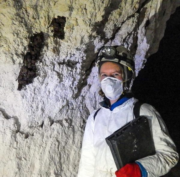 Hohoff monitors hibernating bats in southern Illinois in winter. (Image: Jocelyn Karsk)