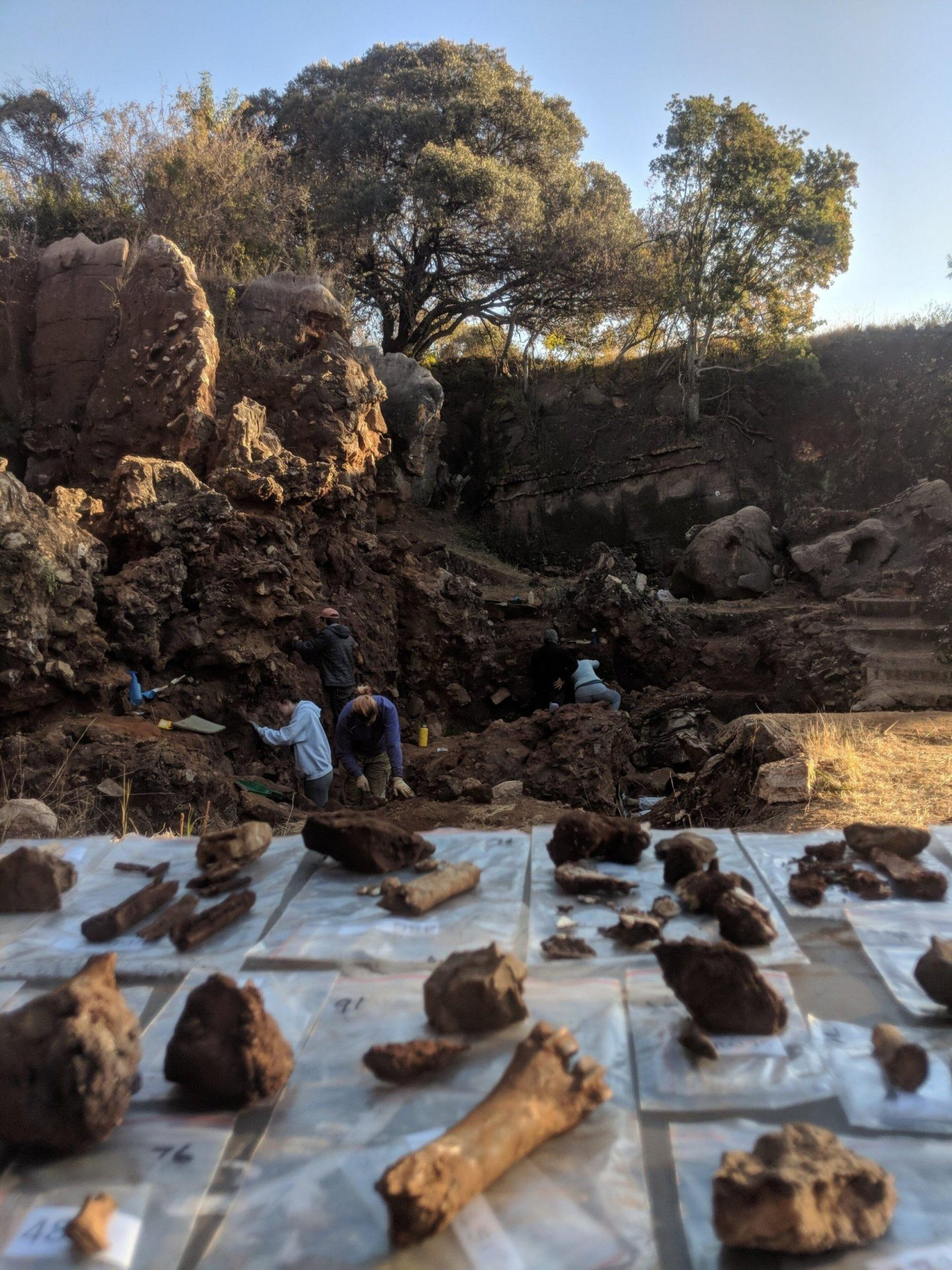 The Drimolen excavations and excavated fossils. (Image: Andy Herries)